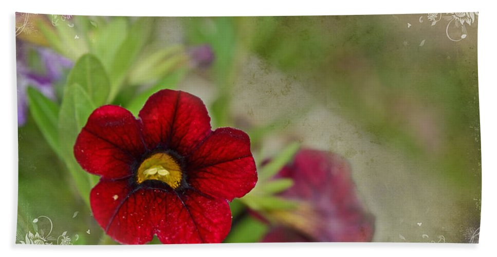 Nature Bath Sheet featuring the photograph Burgundy Calibrochoa Blank Greeting Card II by Debbie Portwood