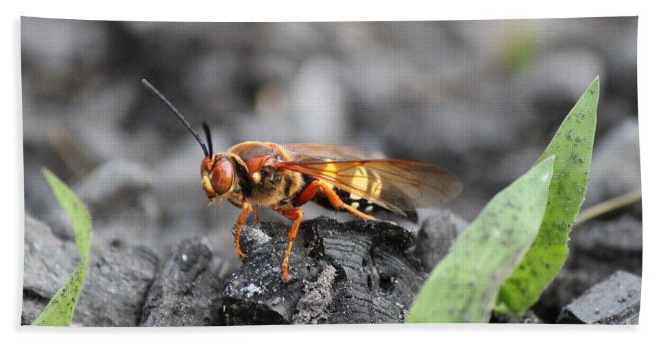 Bee Bath Sheet featuring the photograph Burn Pile Bee by Jennifer E Doll