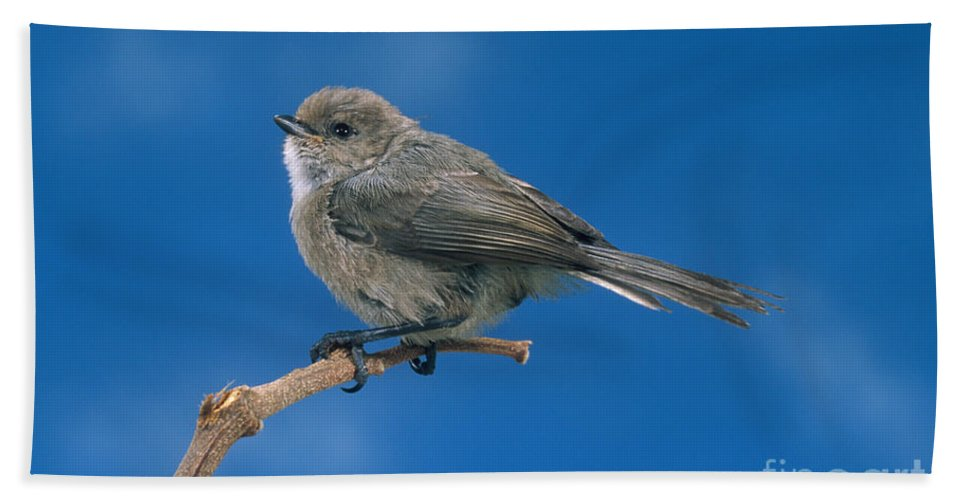 Animal Hand Towel featuring the photograph Bushtit by Anthony Mercieca