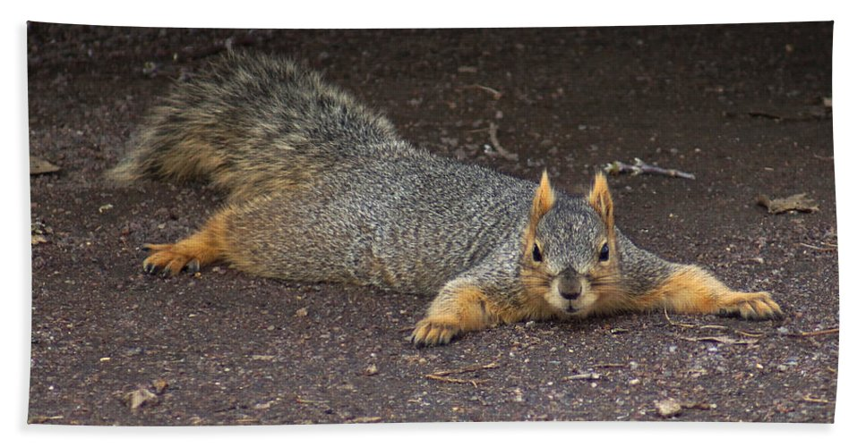 Squirrel Hand Towel featuring the photograph Busted by Lori Tordsen