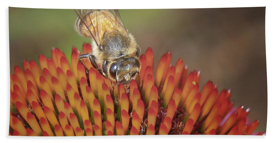 Bee Bath Sheet featuring the photograph Busy As A Bee by David and Carol Kelly