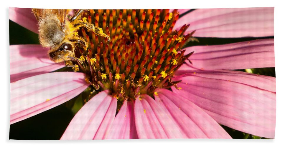 Bee Hand Towel featuring the photograph Busy Bee by Bill Wakeley