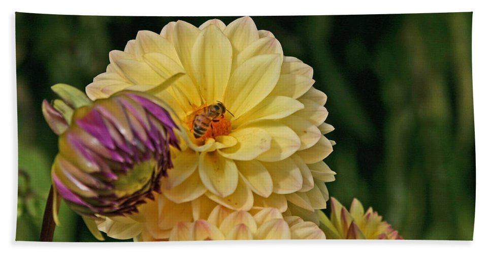 Bee Hand Towel featuring the photograph Busy Bee by Hugh Carino