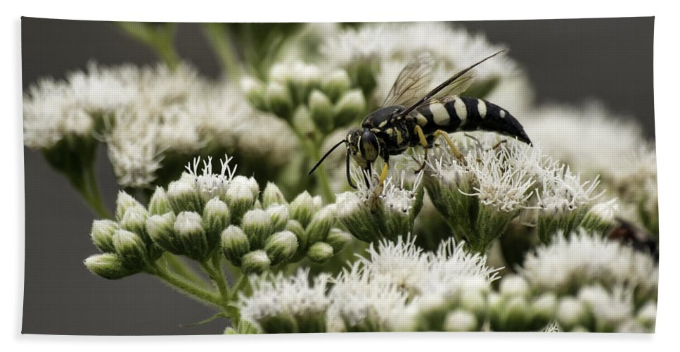 Bee Bath Sheet featuring the photograph Busy Bee On White by Thomas Young