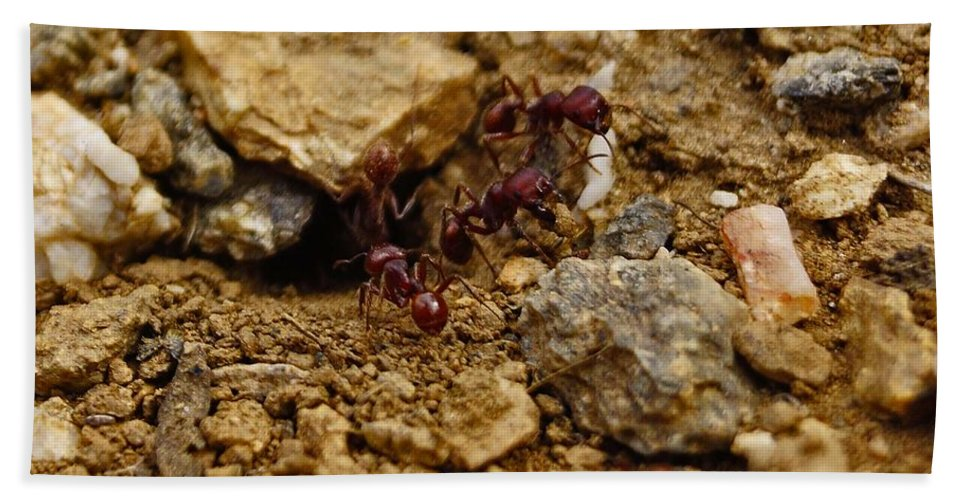 Ants Bath Sheet featuring the photograph Busy Work by Patrick Moore