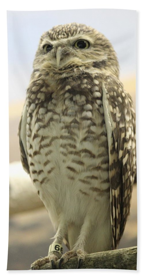 Owl Bath Sheet featuring the photograph But Hoo by Tiffany Erdman