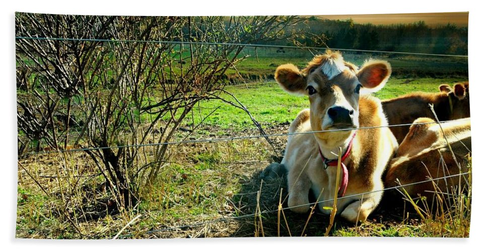 Cow Bath Sheet featuring the photograph Buttercup by Diana Angstadt
