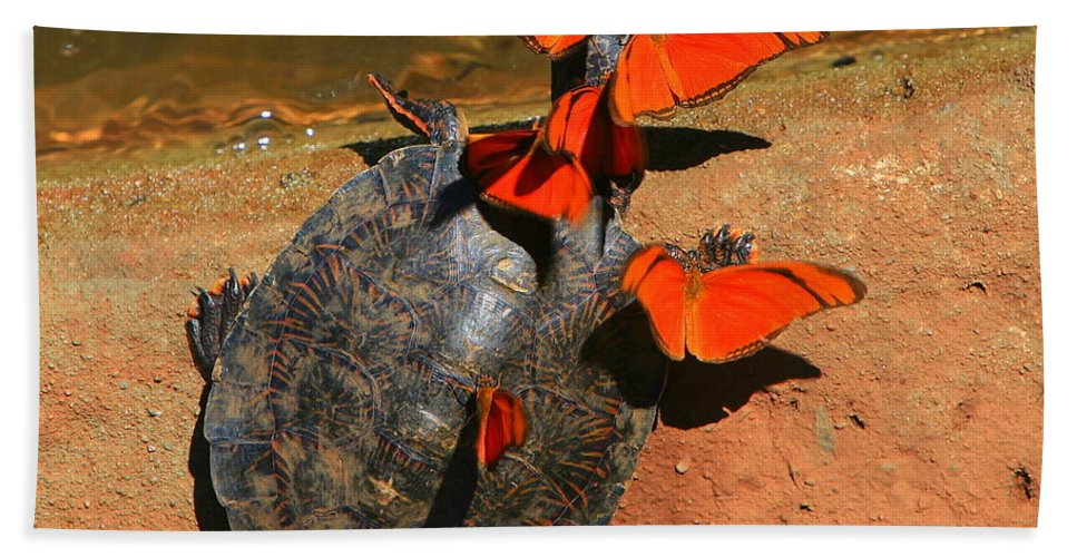 Turtle Hand Towel featuring the photograph Butterflies And Turtle by Bruce J Robinson
