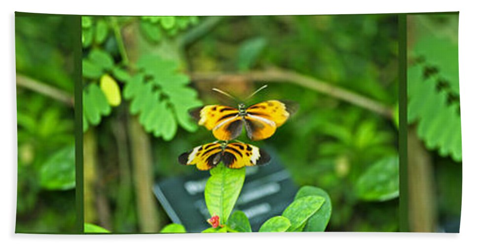 Il Bath Sheet featuring the photograph Butterflies Gentle Courtship 3 Panel Composite by Thomas Woolworth