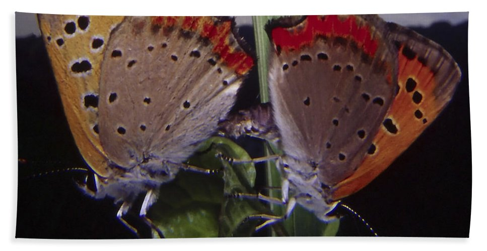 Butterfly Hand Towel featuring the photograph Butterfly 001 by Ingrid Smith-Johnsen