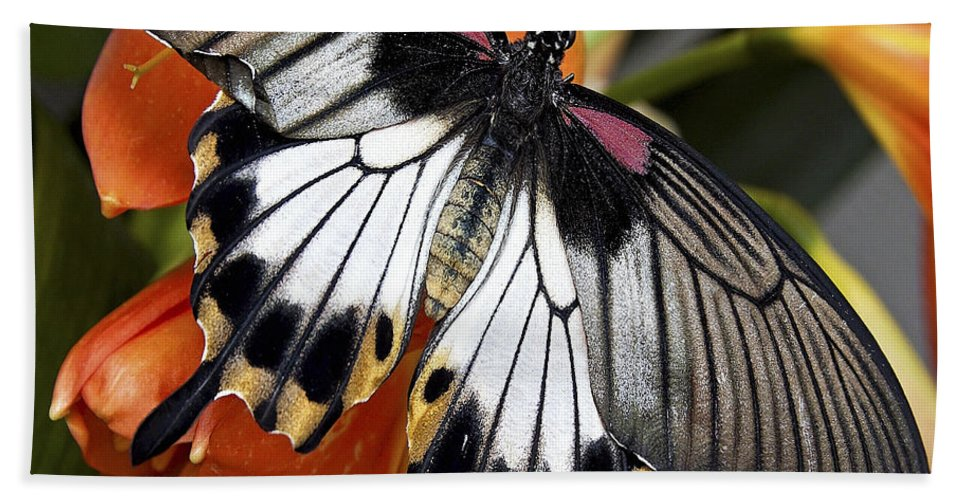 Butterfly Hand Towel featuring the photograph Butterfly 006 by Ingrid Smith-Johnsen