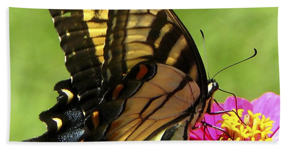 Butterfly Hand Towel featuring the photograph Butterfly 011 by Ingrid Smith-Johnsen