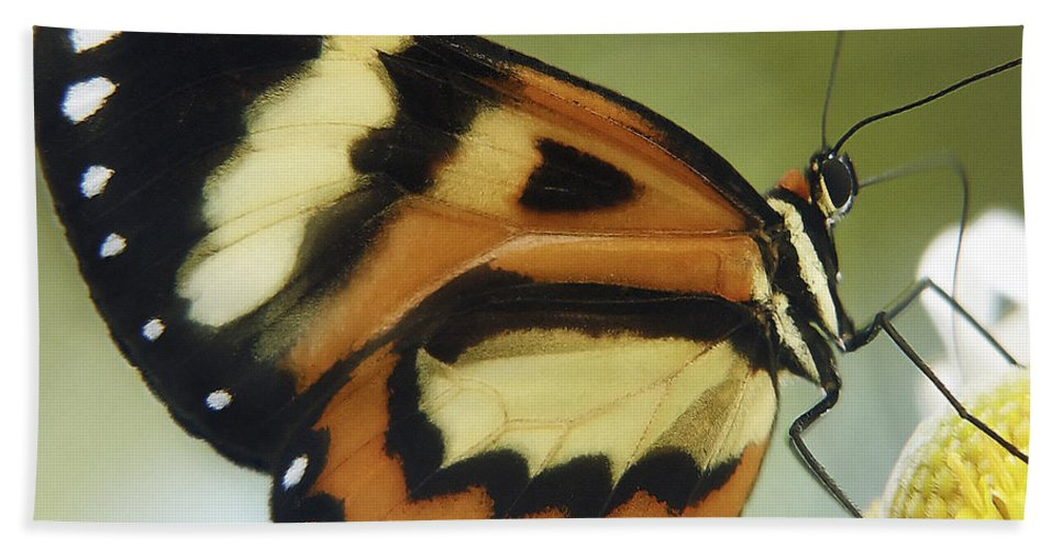Butterfly Hand Towel featuring the photograph Butterfly 013 by Ingrid Smith-Johnsen