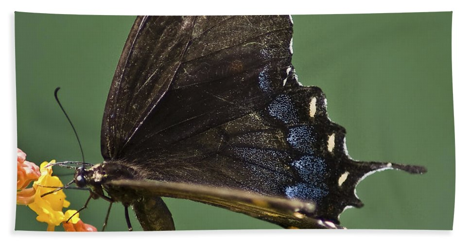 Butterfly Hand Towel featuring the photograph Butterfly 017 by Ingrid Smith-Johnsen