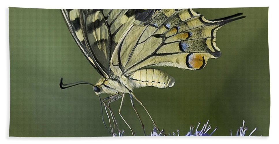 Butterfly Bath Sheet featuring the photograph Butterfly 020 by Ingrid Smith-Johnsen