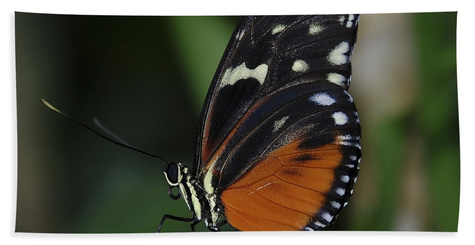 Butterfly Bath Sheet featuring the photograph Butterfly 025 by Ingrid Smith-Johnsen