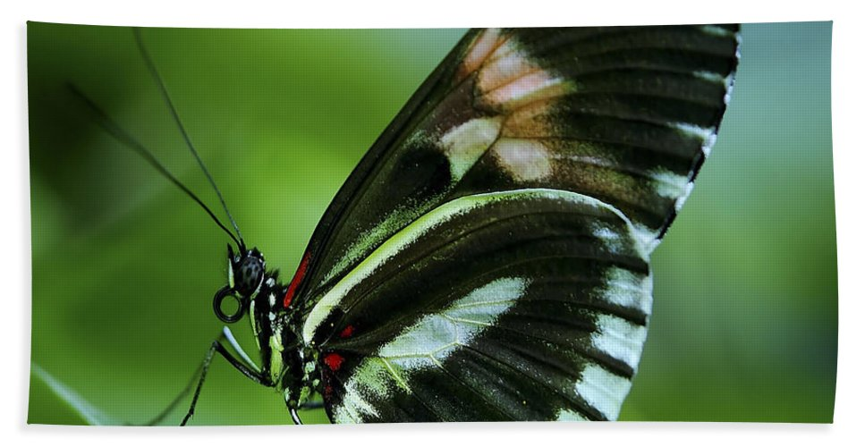Papilio Bath Sheet featuring the photograph Butterfly 026 by Ingrid Smith-Johnsen