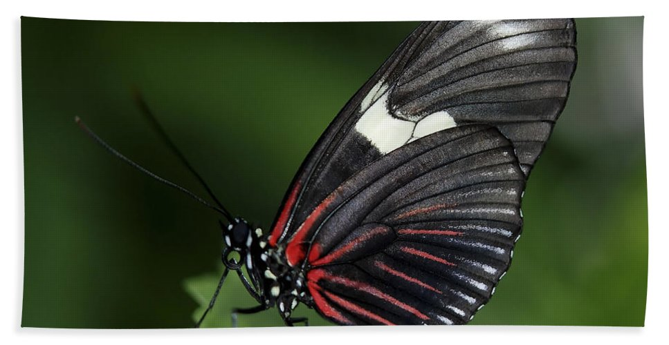Animal Bath Sheet featuring the photograph Butterfly 027 by Ingrid Smith-Johnsen