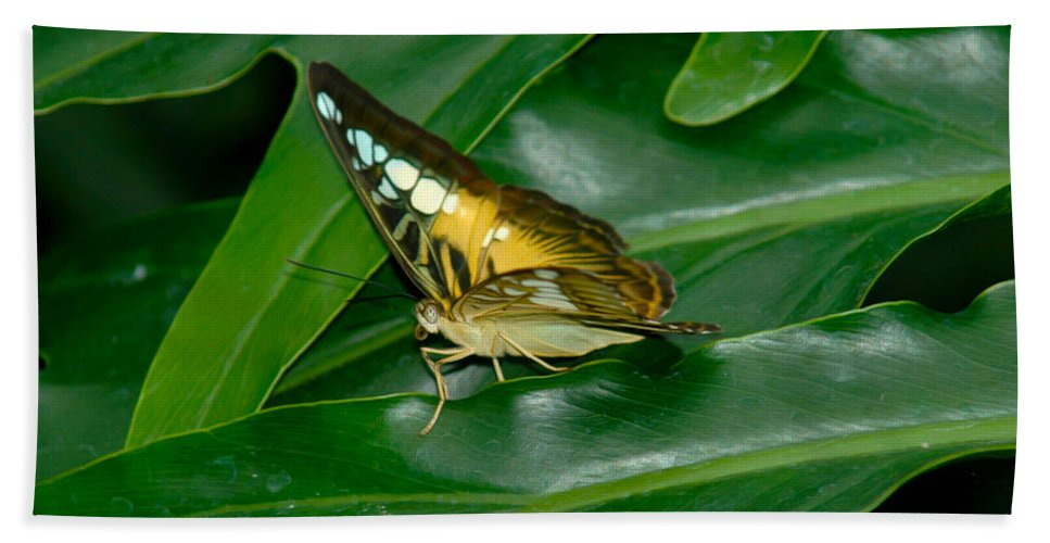 Butterfly Hand Towel featuring the photograph Butterfly 1 by Tracy Winter