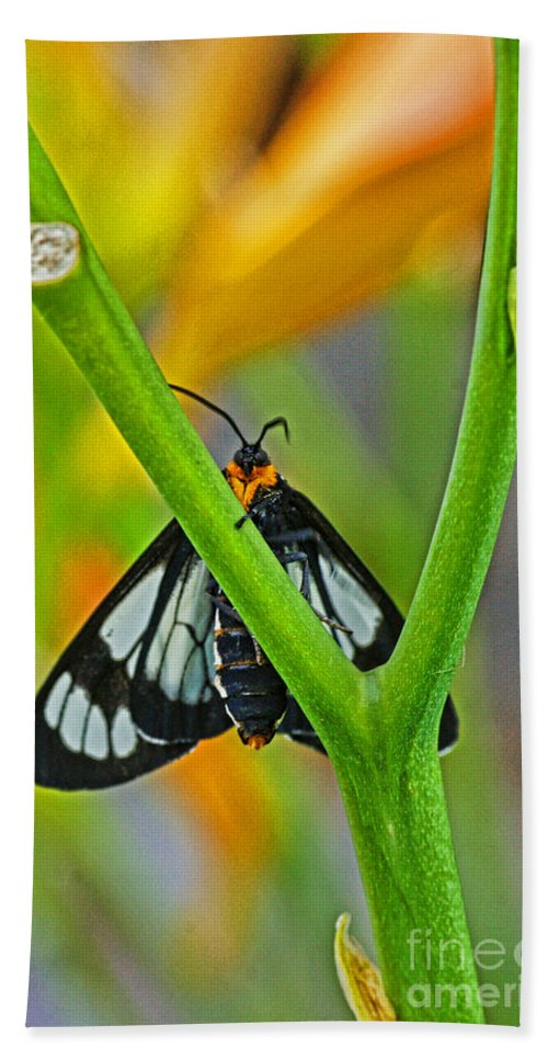 Butterflies Hand Towel featuring the photograph Butterfly An3597-13 by Randy Harris