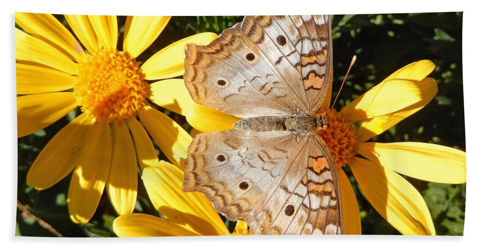 Heather Coen Bath Sheet featuring the photograph Butterfly And Daisies by Heather Coen