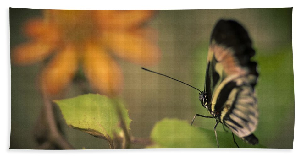 Florida Hand Towel featuring the photograph Butterfly And Flower by Bradley R Youngberg