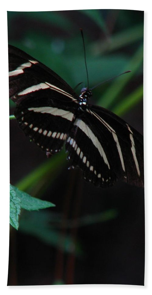 Art For The Wall...patzer Photography Hand Towel featuring the photograph Butterfly Art 2 by Greg Patzer