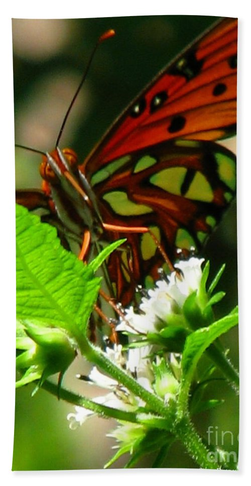 Patzer Hand Towel featuring the photograph Butterfly Art by Greg Patzer