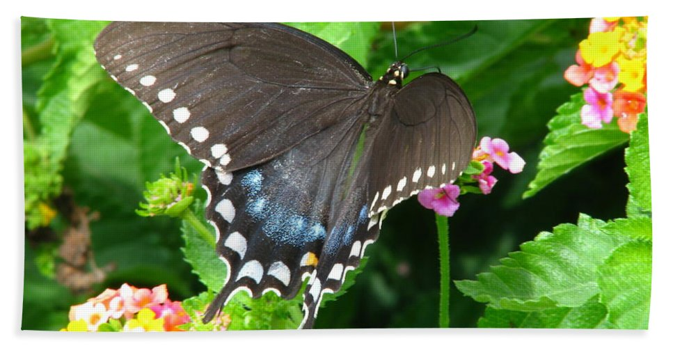 Patzer Hand Towel featuring the photograph Butterfly Ballot by Greg Patzer