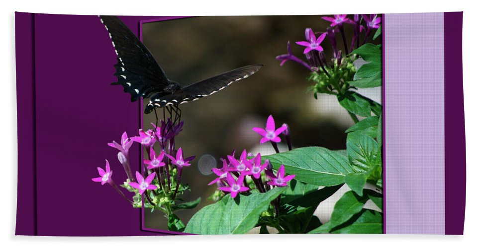 Butterfly Bath Sheet featuring the photograph Butterfly Black 16 By 20 by Thomas Woolworth