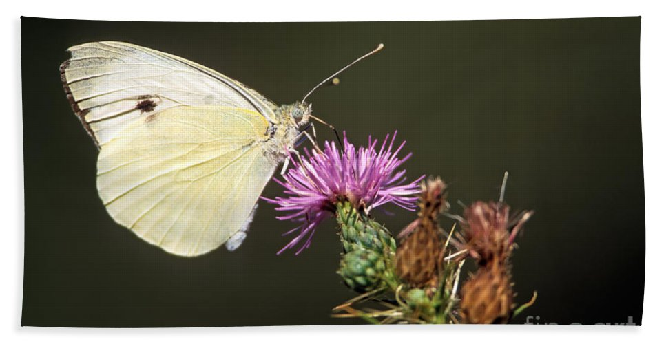 Butterfly Bath Sheet featuring the photograph Butterfly by George Atsametakis