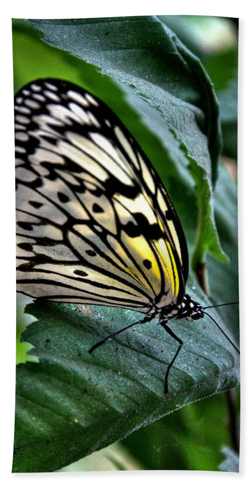Paper Kite Bath Sheet featuring the photograph Butterfly - Green Leaf by Mark Valentine