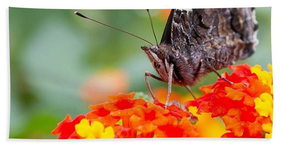 Butterfly Hand Towel featuring the photograph Butterfly Hanging Out On Wildflowers by Nikki Vig