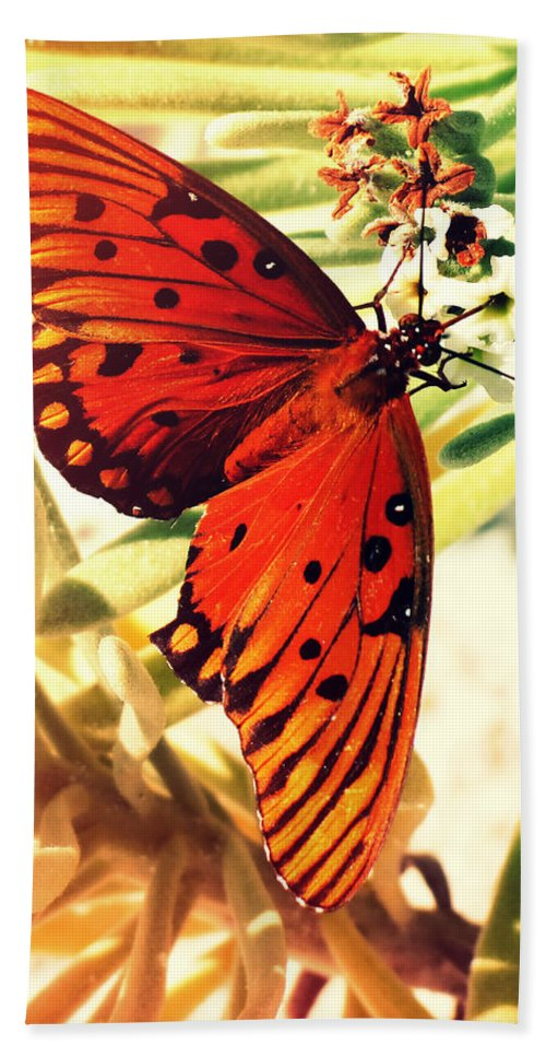 Florida Hand Towel featuring the photograph Butterfly II by Chris Andruskiewicz