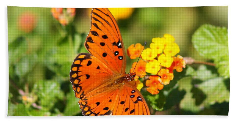 Butterfly Bath Sheet featuring the photograph Butterfly In The Glades - Gulf Fritillary by Christiane Schulze Art And Photography