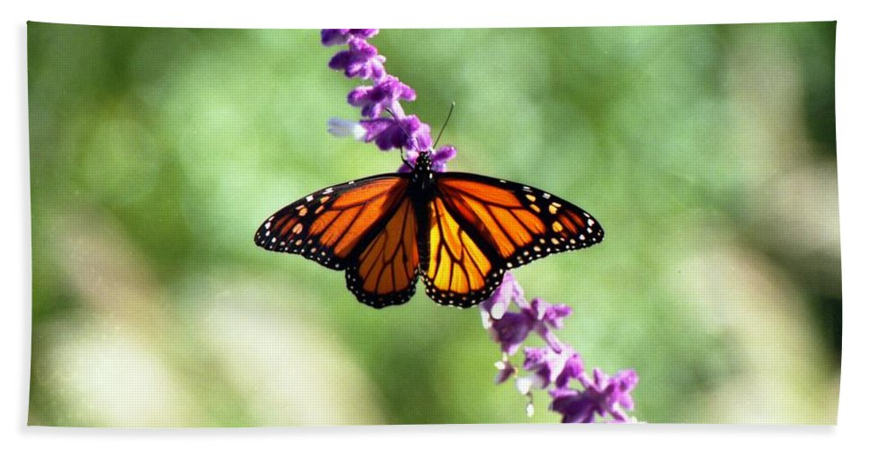 Butterfly Bath Sheet featuring the photograph Butterfly - Monarch by Pamela Critchlow