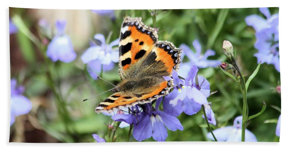 Butterfly Bath Towel featuring the photograph Butterfly On Blue Flower by Gordon Auld