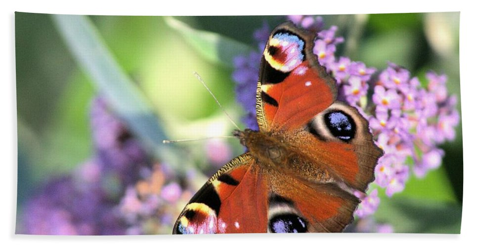 Butterfly Bath Towel featuring the photograph Butterfly On Buddleia by Gordon Auld