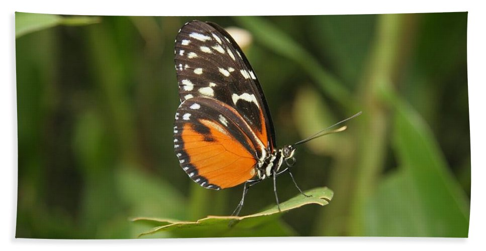 Animal Bath Sheet featuring the photograph Butterfly On Leaf by Cyril Brass