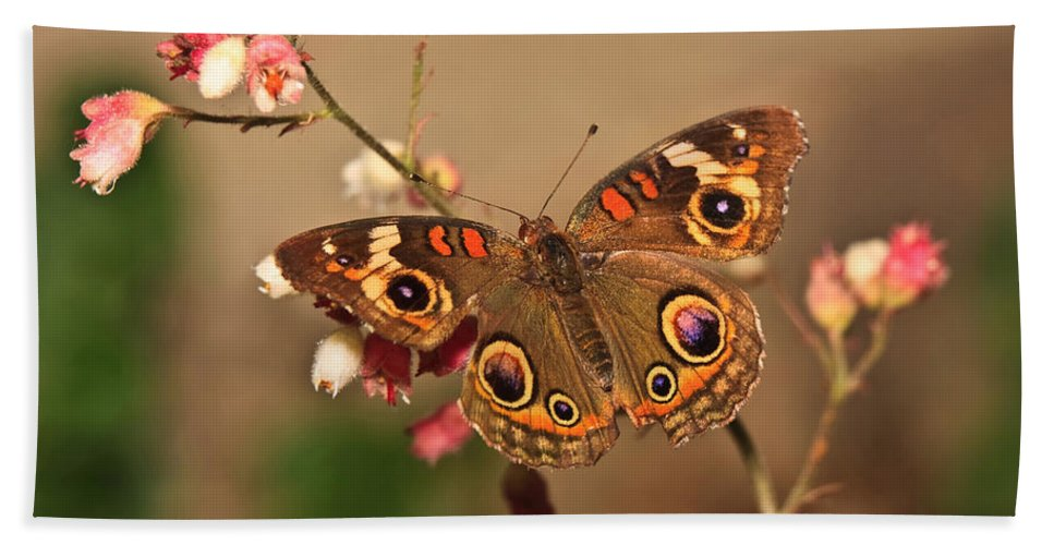 Butterfly Hand Towel featuring the photograph Butterfly On Pink by Beth Sargent