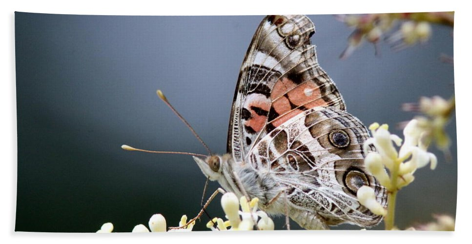 Lady Bath Sheet featuring the photograph Butterfly - Painted Lady - Tasty Out Here by Travis Truelove
