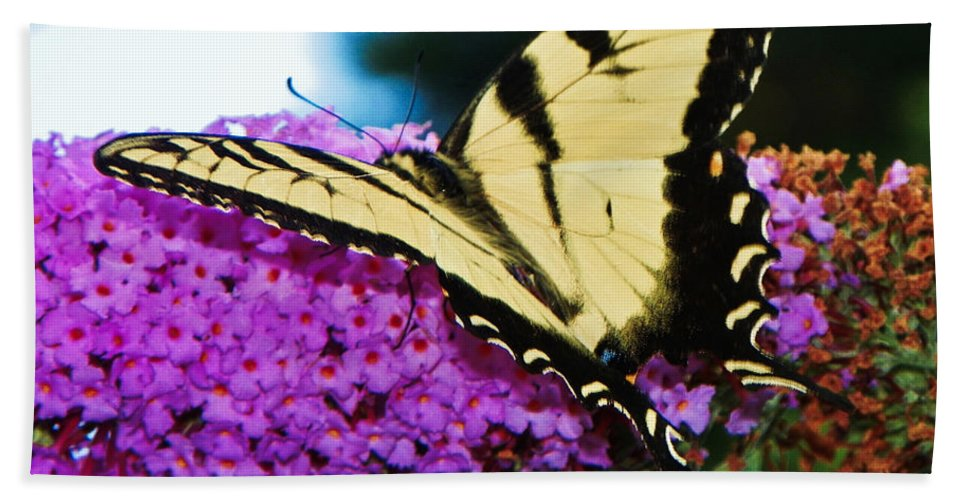 Nature Hand Towel featuring the photograph Butterfly by Paul Smith