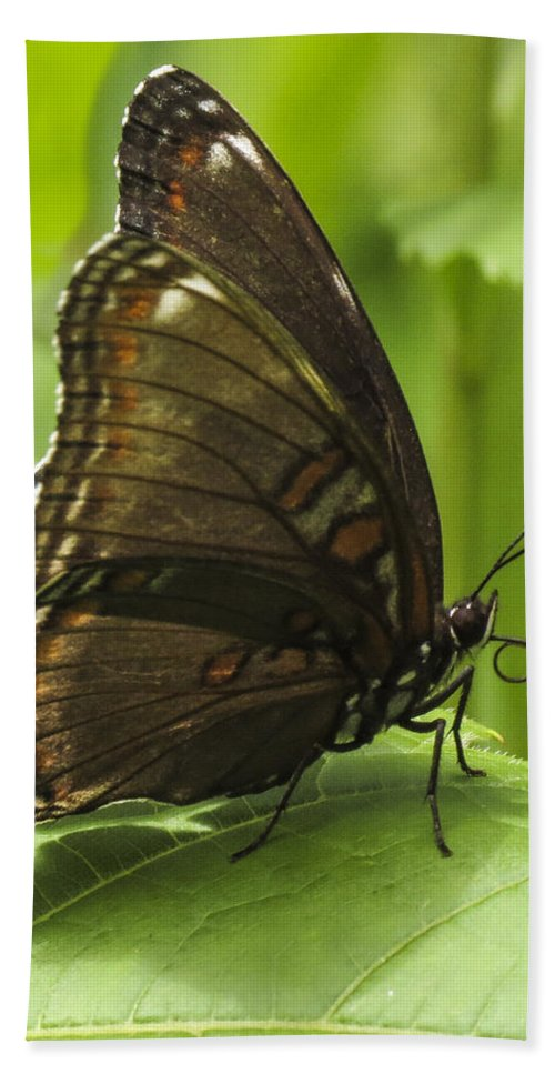 Birchfield Nature Preserve Hand Towel featuring the photograph Butterfly Resting by Darleen Stry