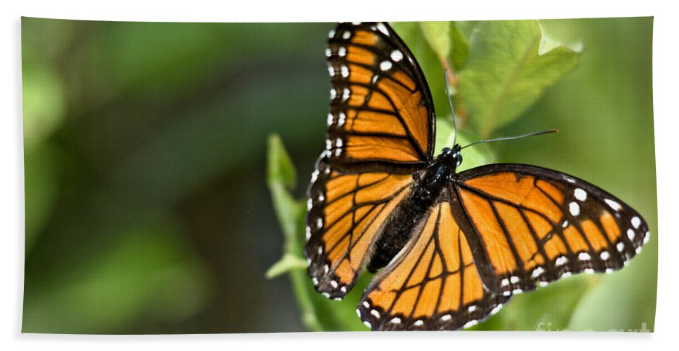 Monarch Hand Towel featuring the photograph Butterfly Scene by Cheryl Baxter