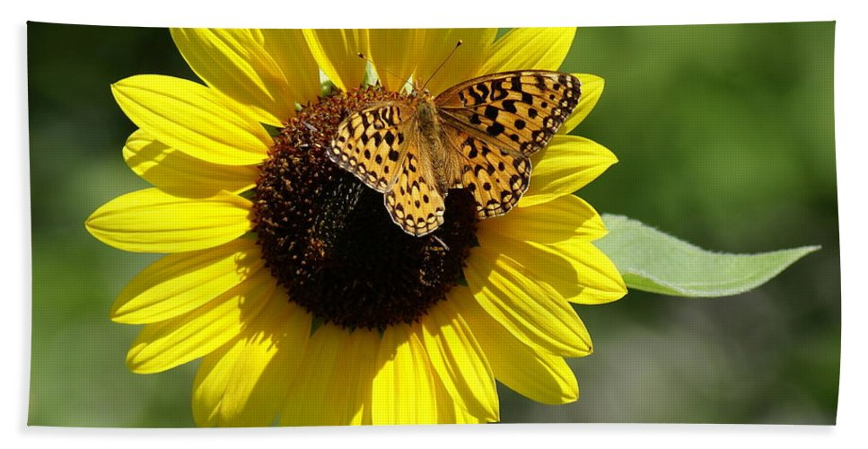 Spokane Hand Towel featuring the photograph Butterfly Sunflower by Ben Upham III