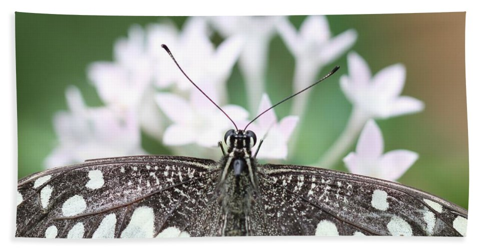 Butterfly Hand Towel featuring the photograph Butterfly View by Ramabhadran Thirupattur