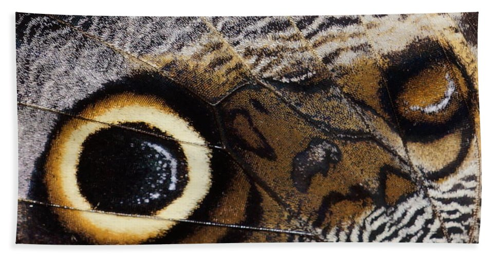Pattern Bath Sheet featuring the photograph Butterfly Wing by Alan Hutchins
