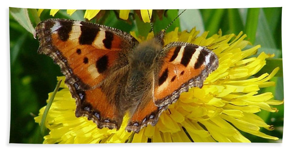 Butterfly Hand Towel featuring the photograph Butterfly Yellow by Carol Lynch