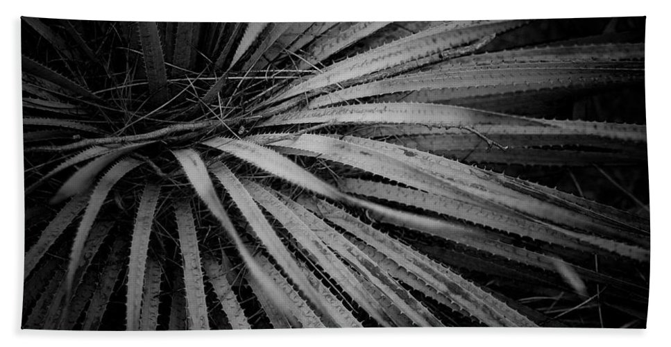 Botanicals Bath Sheet featuring the photograph Cactus 5250 by Timothy Bischoff