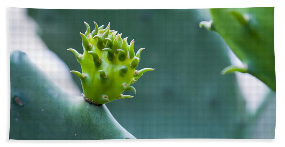 Cactus Hand Towel featuring the photograph Cactus by Alexey Stiop
